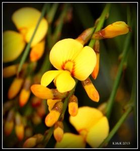 2016_calendar_wildflowers_32