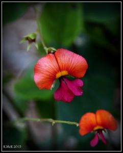 2016_calendar_wildflowers_33