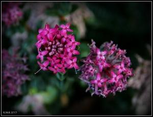 2016_calendar_wildflowers_34