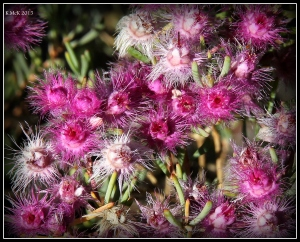 2016_calendar_wildflowers_35