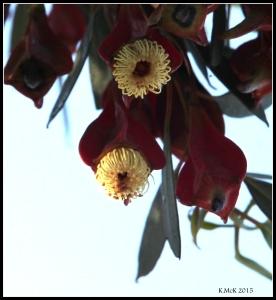 2016_calendar_wildflowers_4