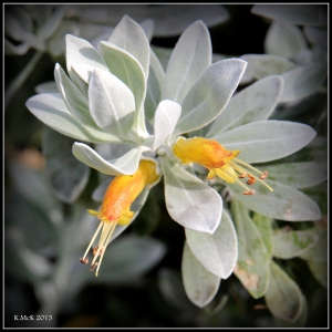 2016_calendar_wildflowers_41