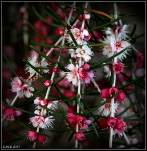 2016_calendar_wildflowers_43