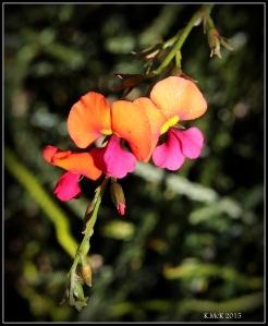 2016_calendar_wildflowers_44