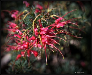 2016_calendar_wildflowers_45