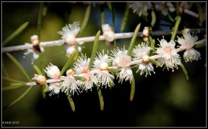 2016_calendar_wildflowers_46