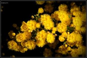 2016_calendar_wildflowers_48