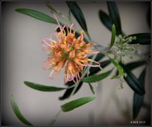 2016_calendar_wildflowers_5