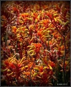 2016_calendar_wildflowers_56
