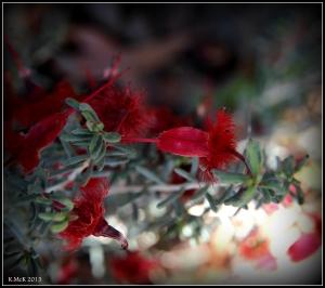 2016_calendar_wildflowers_58