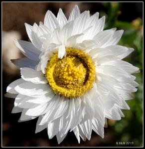 2016_calendar_wildflowers_6