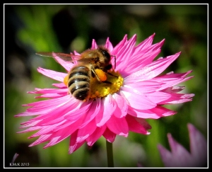 2016_calendar_wildflowers_8