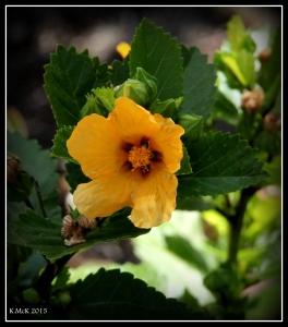 flower_15