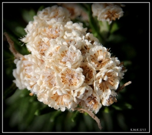 flower_20