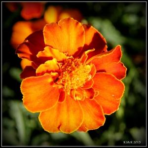 flower_23