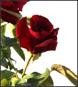 flower_25