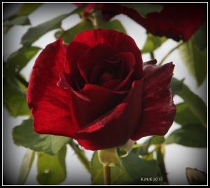 flower_26