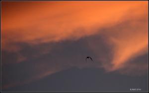 birds_5