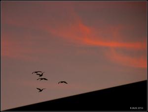birds_6
