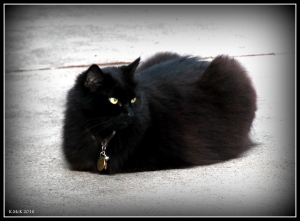cat_8