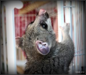 possum_8