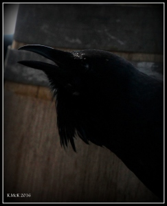 bird_12