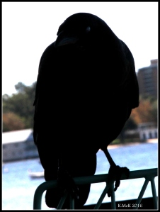 bird_16