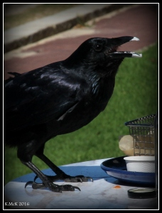 bird_21
