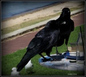 bird_22