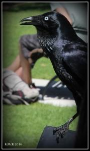 bird_24