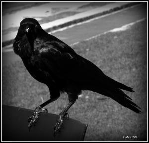 bird_28