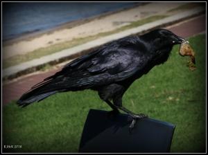 bird_29