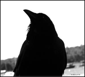 bird_8