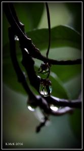 drops_1