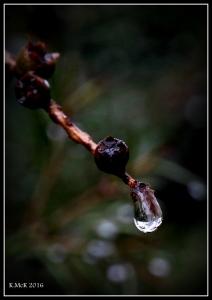 drops_11