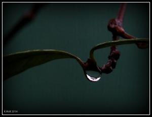 drops_15