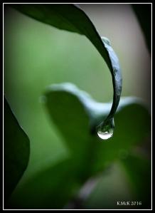 drops_7