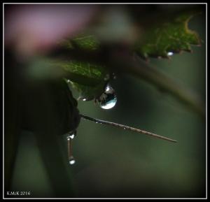 garden_12