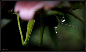garden_13