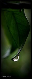 garden_6