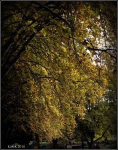 autumn_3