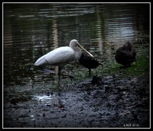 bird_4