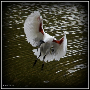 bird_6