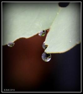 drops_21