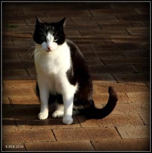 cat_15