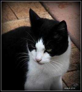 cat_16