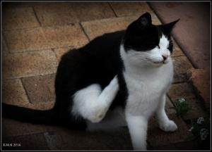 cat_17
