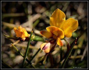 flower_18