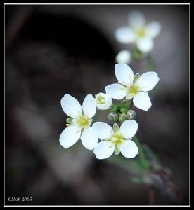 flower_21