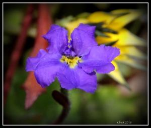 flower_27
